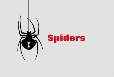 Spiders Control and Extermination