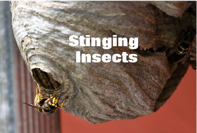 Stinging Insects Inspection and Removal